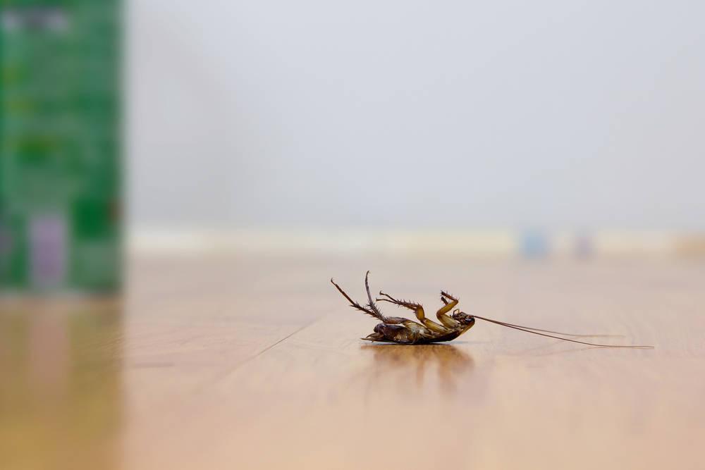 Esa cosa que corre por tu escritorio no va a extinguirse sola