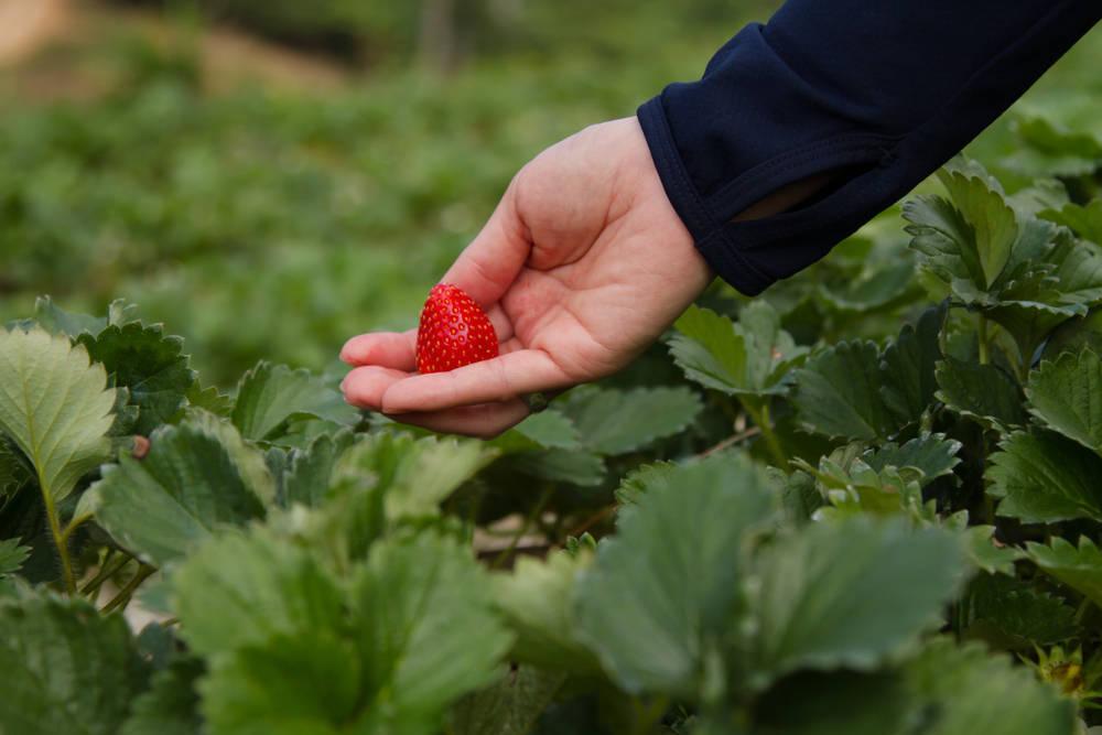 El éxito de la agricultura ecológica