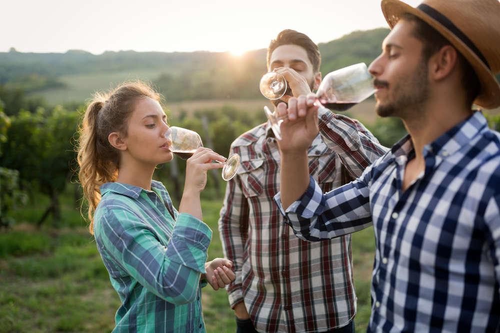El negocio del vino, sus temperaturas ideales