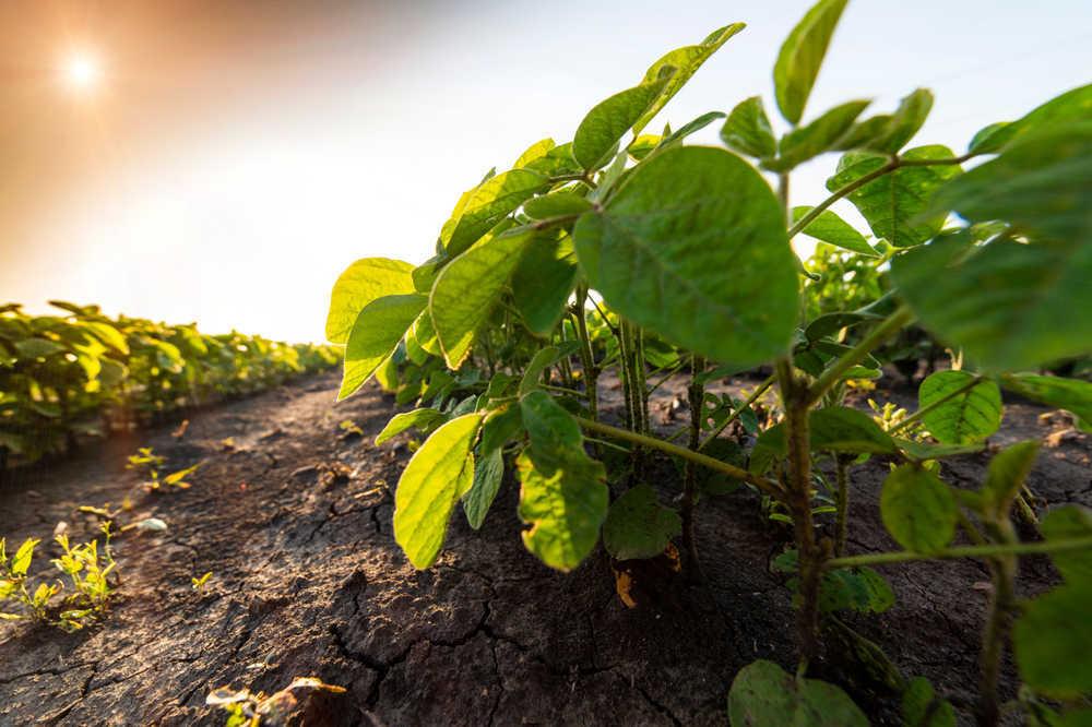 La apuesta por el aumento de cultivos irá en favor de los agricultores españoles